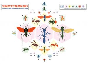A graphic image showing a variety of illustrations of stinging insects over lightly colored geometric shapes with intensity numbers, and a title that reads Schmidt's sting pain index