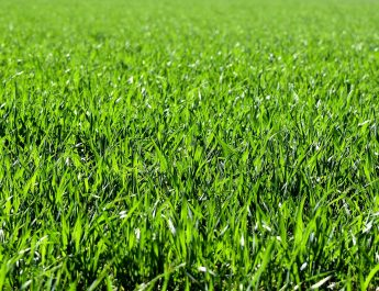The Case Against Green Grass